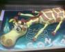 23 – Girafa